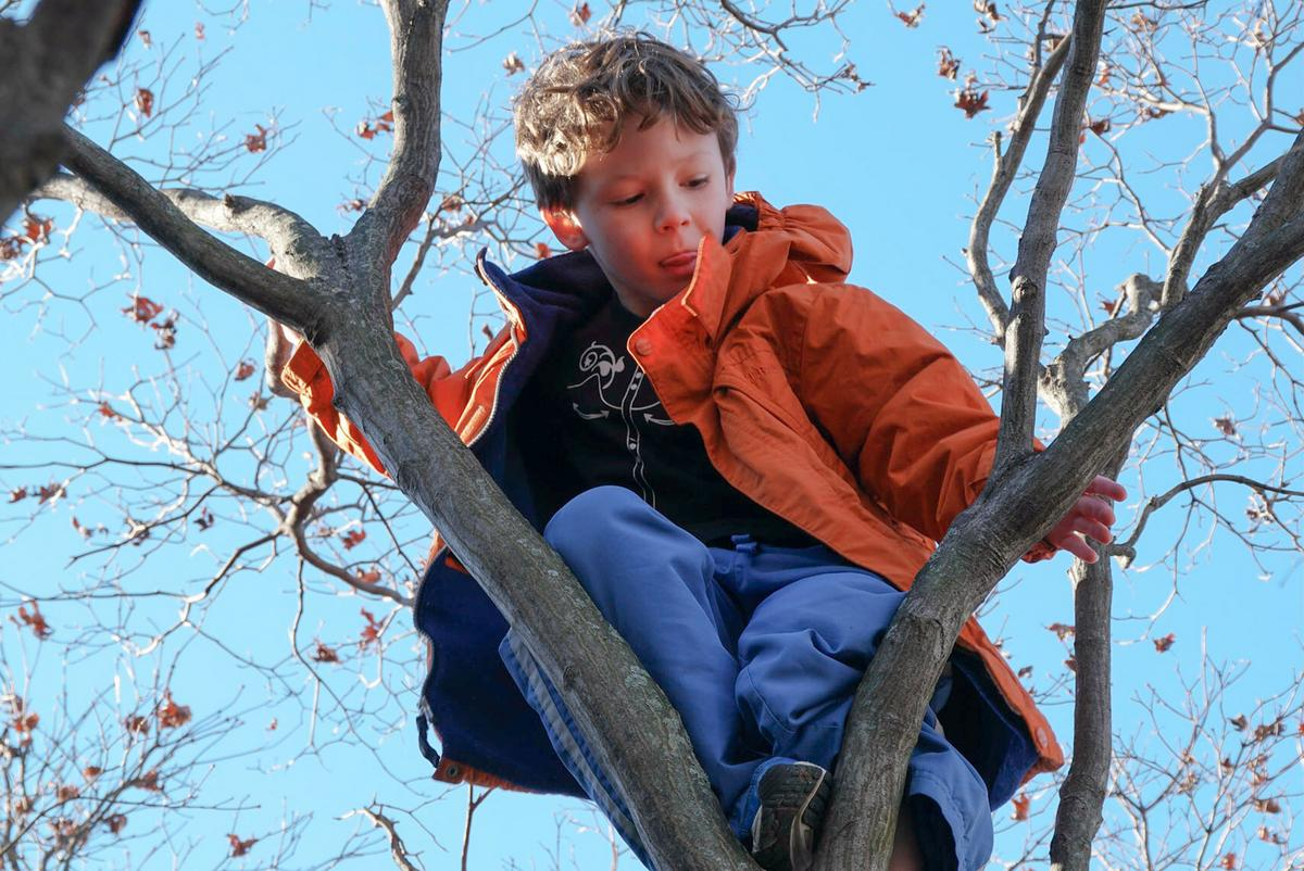 Student in tree